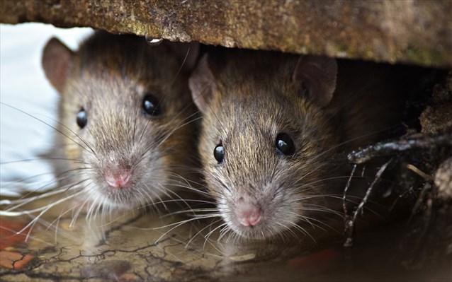 ποντικια-καταπολεμιση